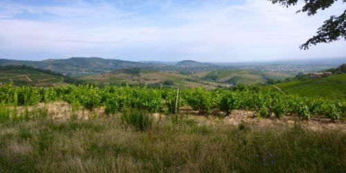 Les vignobles et la plaine de la saône ©Ph Chazottier