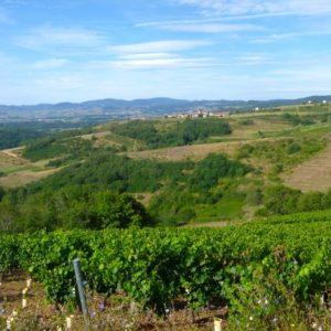 R3 Vue sur le haut Beaujolais et ses vignes©Ph Chazottier